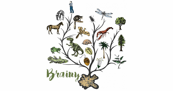 Brainy/«Эволюция: теория или факт?»