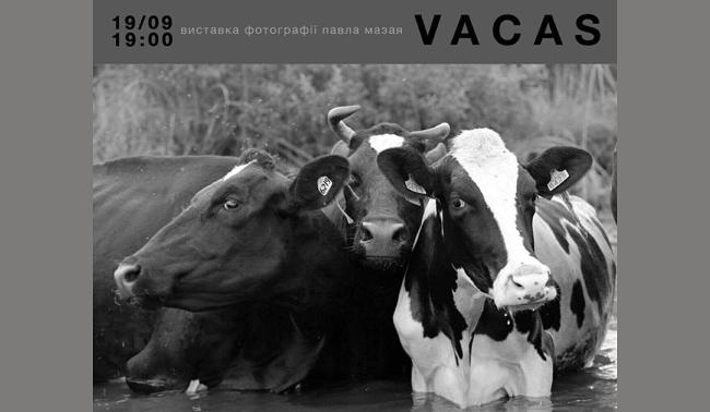 Коровы, Vacas